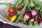 Yellow, pink, red, violet tulips  — Stockfoto