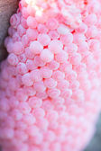 Eier schnecke — Stockfoto