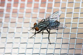 Closeup of a Fly on the net — Stock Photo