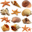 Shell And Sea Snail Set — Stock Photo