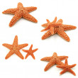 Starfish Set — Stock Photo