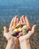 Shells in the hands — Stock Photo