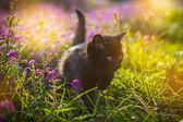 Gatinho em flores — Foto Stock