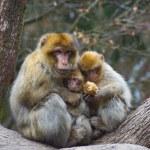 Monkey Love — Stock Photo #44034033
