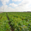 Crops growing on fertile farm land in Israel — Stock Photo
