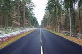 Symmetry and Convergence in the Black Forest — Stock Photo
