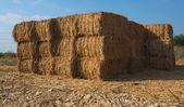 在以色列的一个农场干草的堆叠的模块 — 图库照片