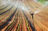 Sprinkler irrigated newly planted field — Stock Photo