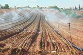 Regador regado recién plantado campo — Foto de Stock
