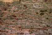 tree  bark  wood textured  background — Stock Photo