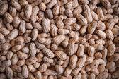 Verse pinda's uit de markt te koop — Stockfoto