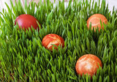 Easter eggs on green grass — Foto de Stock