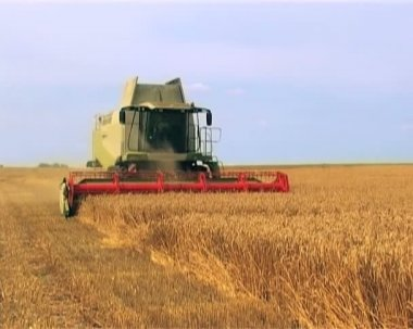 Combine gather in the crops of wheat in summer — Stockvideo