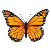Monarch butterfly. Hand drawn vector illustration — Stock Vector