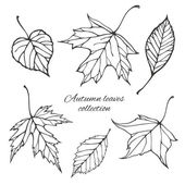 Set of outline autumn leaves — Vector de stock