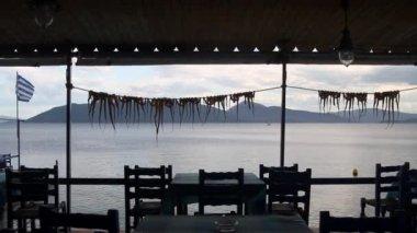 Octopus getting dry in greek taverna near the sea — Stock Video