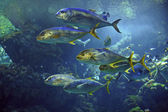 Coral fishes in the aquarium — Stock Photo