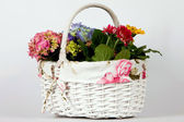 White basket with alive flowers — Stock Photo