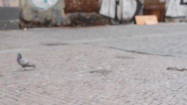 Cigarettfimpar på gatan överst i avloppet — Stockvideo