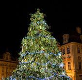 Weihnachtsbaum mit gebäude im hintergrund am altstädter ring — Stockfoto