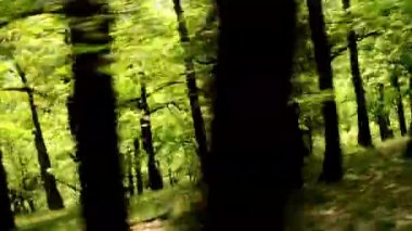 Forest - steadicam flying in forest — Stock Video