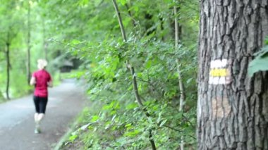 Маркировка пути на дерево - лес с путь - женщина работает — Стоковое видео