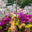 Bush of bouganvillea and the buildings of Modica in Sicily, Italy — Stock Photo #45747705