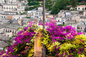 Bush of bouganvillea and the buildings of Modica in Sicily, Italy — Stock Photo
