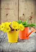 Flores amarillas del diente de león — Foto de Stock
