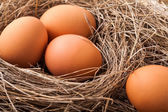 Chicken eggs  — Stock Photo