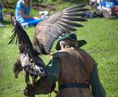 Falconer eagle bird wings — Stock Photo