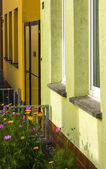 Flowers front garden housing colourful — Stock Photo