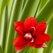 Red flower blossom — Stock Photo #44722229