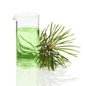 Coniferous extract for cosmetology — Stock Photo