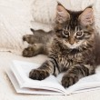 Maine coon kitten reading book — Stock Photo #45092477