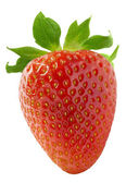 One vertical strawberry isolated on white background — 图库照片