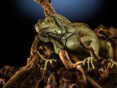 Creepy dragon. — Stock Photo
