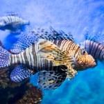 Underwater tropical fish — Stock Photo