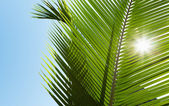 Green palm leaves in the sunshine — Stock Photo
