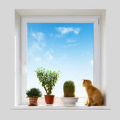 Cat and house plants — Stock Photo