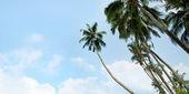 Palm trees — Stok fotoğraf