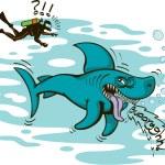 Постер, плакат: Shark and diver