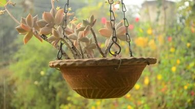 Hanging fairy leaves. — Stock Video