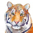 Tiger — Stock Photo #45369291