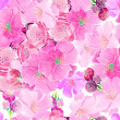 Watercolor cherry blossoms — Stock Photo