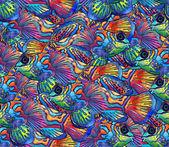 Beautiful tropical fish — Stock Photo