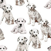 Dalmatian puppies — Stock Vector