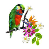 Exotic birds and beautiful flowers — Stock Vector