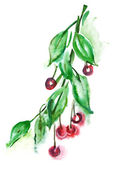 Cherry branch — Stock Photo