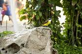 Tropical bird — Stock Photo